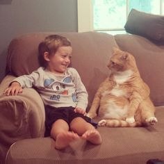 A cat and a child at a diplomatic summit. | 25 Animal Pictures That Will Restore Your Faith In Animals