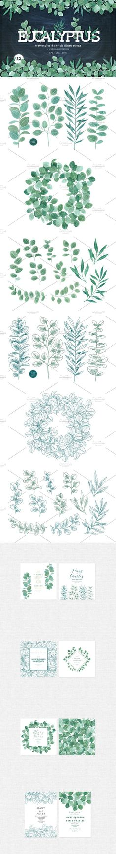 Eucalyptus leaves collection. Watercolor Flowers