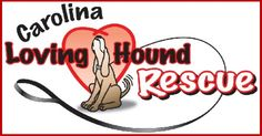 Carolina Loving Hound Rescue  carolina-loving-hound-rescue.com/