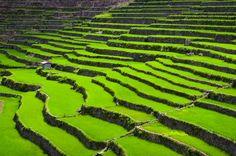 Stairway to Heaven -- Batad Rice Terraces, Philippines