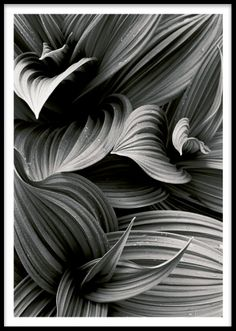 Black and white posters and pictures online. We have a great selection with black and white graphic prints and poster with text, illustrations and graphic designs - find them at Desenio. Poster Shop, Mode Poster, Print Poster, Buy Prints Online, Desenio Posters, Leaf Photography, Nature Posters, Black And White Posters, White Prints