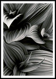 Svartvitt foto med botaniskt motiv.