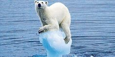 Avaaz - 100% clean - the climate petition to save the world