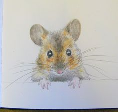Woodmouse sketchbook drawing by Lisa Toppin.