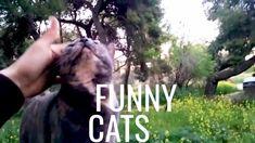 Αστείες γάτες και σκύλος  Μία μάντρα 3 ζώα.