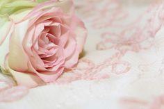 soft rose background