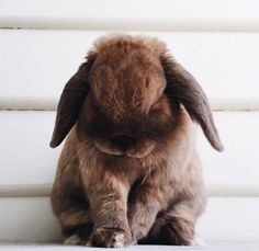 When you are looking for a furry friend which is not just extremely cute, but simple to have, then look no further than a pet rabbit. Funny Bunnies, Baby Bunnies, Cute Bunny, Bunny Rabbits, Funny Pets, Bunny Bunny, Cute Baby Animals, Animals And Pets, Funny Animals