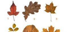 Τι είδους άνθρωπος είσαι; Διάλεξε 1 από τα 6 φύλλα και μάθε το! Leaf Tattoos, Moose Art, Leaves, Animals, Math Resources, Animales, Animaux, Animal, Animais