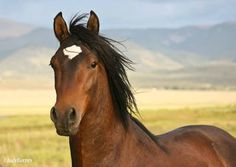 Beautiful Wildhorse