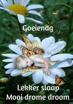 the daisy fairy Morning Prayer Quotes, Morning Prayers, Unicorn And Fairies, Goeie More, Special Quotes, Sleep Tight, Afrikaans, Heaven On Earth, Faeries