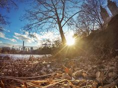 Winter at central pro New York- Germán Rodríguez Laverde