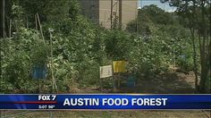 Food forest planned for east Austin - http://austin.citylocalbuzz.com/food-forest-planned-for-east-austin/