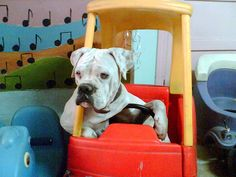 """""""Move it, buddy!  Ihave places to go and people to see!""""     (boxer)"""
