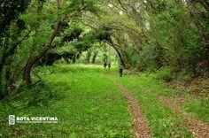 Green and vibrant Alentejo by Rota Vicentina, via Flickr, Portugal