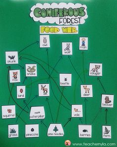 Coniferous Forest Food Web classroom group activity. A follow up to food chains. $