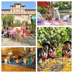 ¡Viva la fiesta! con Beverly Hills Chihuahua 3