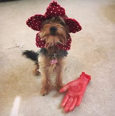 Things party The Demogorgon dog hat. Demodog from Stranger Things. Choose your size Excited to share the latest addition to my shop: The Demogorgon dog hat. Demodog from Stranger Things. Choose your size. Disfraces Stranger Things, Brenner Stranger Things, Demogorgon Costume, Princess Margaret Wedding, Animal Costumes For Kids, Dog Onesies, Toddler Girl Halloween, Summer Holiday Outfits, Cutest Animals