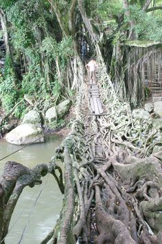 LIVING Tree Root Bridge in West Sumatra, Indonesia.  Planted in 1890, two small villages use the living roots of two Jawi-jawi trees (a type of Banyan tree) on opposite sides of the river banks to cross the river.  Strong roots!