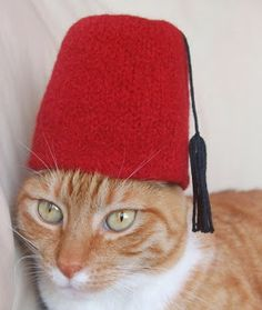 Spindles and Spices: International Cat Hat: Turkey