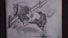 Wild horse...
