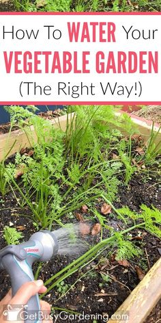 Vegetable garden irrigation is one of the most crucial factors for growing food. So it's important to learn how to water a vegetable garden the right way! (AD)