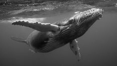 Interview with Bryan Austin about humback whale photography.
