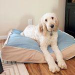 15 Ways To Make A Dog Bed Or Pillow: {Free Tutorials} : TipNut.com