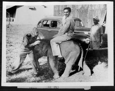 Maharaja of Cooch Behar Jagaddipendra Narayan on a baby elephant , 1943.By Rohit Sonkiya