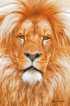 LEO.....THE OLD LION BY JERRY L. BARRETT