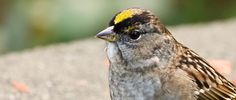 Researchers Identify Birds Hosting Lyme Disease
