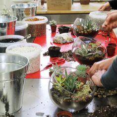 succulent terrarium class at periwinkle flowers in toronto