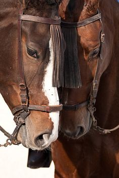 Peaceful. Beautiful horses
