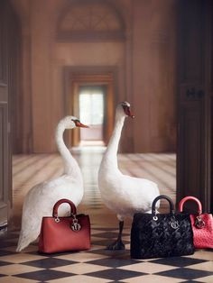 Dior: An Exceptional Christmas by Koto Bolofo