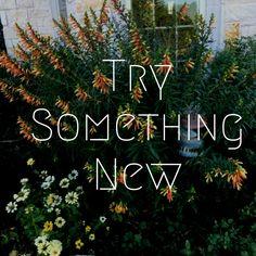 Somervell County Master Gardener Association Newsletter: Try Something New.