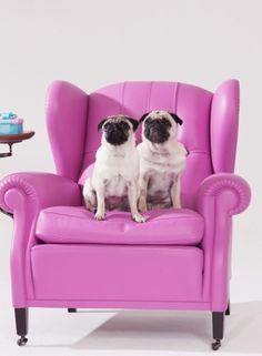 Princess pugs on their throne