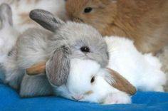 awe. i really wanna snuggle a bunny. Too bad my pet rabbit doesn't like cuddles :(