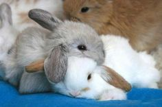 3 cuddly bunnies!