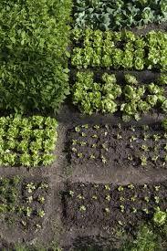 Bildresultat för köksträdgård bärbuskar