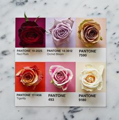 Playing with Pantone Cards and Colours seems a great idea!