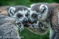 Family Ties by MonAmi Photography on 500px