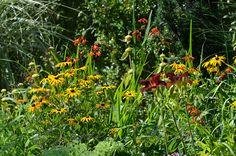 ein mit gelben und roten  Stauden gestaltetes Blumenbeet
