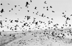 Cuanhtemoc Colonies, Larry Towell