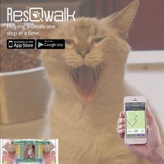We are very excited to announce that ResQwalk has launched the Android app! To download the Android version go to: https://play.google.com/store/apps/details?id=com.resqwalk   You can also walk for Winging Cat Rescue on your iPhone! https://itunes.apple.com/us/app/resqwalk/id889050235?mt=8