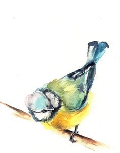 Titmouse Bird Watercolor Painting Art Print, Watercolour Wall Art, Bird Art