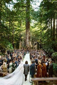 #wedding#redwoods#view