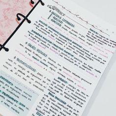 anotações sobre evolução! Amo tanto essa matéria, de vez em quando ainda me pego debatendo algumas teorias || #study #studyblr #studying #studygram ||
