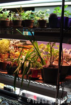 Please Share This Page: How To Build A Low-Cost DIY Plant Lighting System – Image To Repin / ShareImage – http://yougrowgirl.com/build-a-d-i-y-lighting-system/ Here is an article (link after our commentary) that will give you instructions and helpful tips for setting up your very own versatile propagation system! The writer, Gayla, gives us her previous experience and [...]