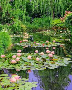 Water lily, a flower in the water and a great decoration for your garden – Fotografie Beautiful Landscapes, Beautiful Gardens, Beautiful Flowers, Beautiful Places, Landscape Photography, Nature Photography, Outdoor Photography, Lily Pond, Dream Garden