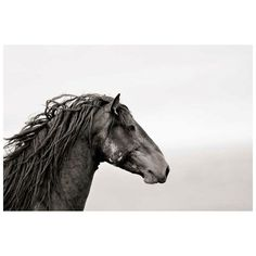 Equine Photography Tips by Kimerlee Curyl: Take a Photo that Sells! Majestic Horse, Beautiful Horses, Wild Mustangs, Equine Photography, Family Photography, Photography Tips, Horse Pictures, Horse Art, Wild Horses
