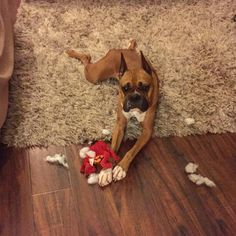 Good bye toys :) Boxer Dog Breed, Dog Breeds, Toys, Animals, Instagram, Animales, Animaux, Species Of Dogs, Animais